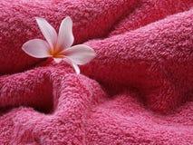 Cor-de-rosa da sensação! Imagens de Stock Royalty Free