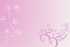 Cor-de-rosa e branco Fotografia de Stock Royalty Free