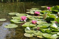 Cor-de-rosa e greenness Imagem de Stock Royalty Free