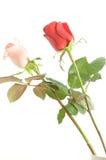 A cor-de-rosa e o vermelho levantaram-se Imagens de Stock Royalty Free