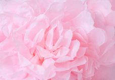 A cor-de-rosa floresce o fundo _1 Macro da textura cor-de-rosa das pétalas Imagem sonhadora macia DOF raso imagens de stock