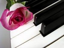 A cor-de-rosa levantou-se em chaves do piano Fotografia de Stock Royalty Free