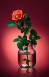 A cor-de-rosa levantou-se em um frasco em um fundo cor-de-rosa Fotografia de Stock Royalty Free