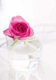 A cor-de-rosa levantou-se na água Fotografia de Stock Royalty Free