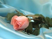 A cor-de-rosa levantou-se no cetim azul Imagem de Stock