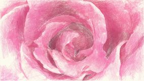 Cor de tiragem da flor cor-de-rosa cor-de-rosa vídeos de arquivo