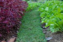 Cor de tom do vegetal dois Foto de Stock
