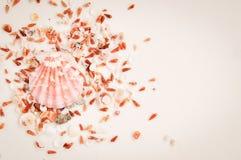 Cor de vida coral destes escudos em um fundo branco tendências em 2019 viagem da aventura do mar do fim de semana do curso fotografia de stock