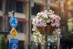 Cor diferente bonita da decoração plástica da flor Imagens de Stock Royalty Free