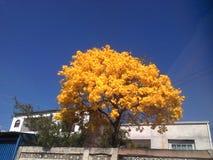 Cor do amarelo da natureza de Flor Flowers sem povos fotos de stock