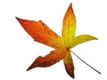 Cor do outono imagem de stock royalty free