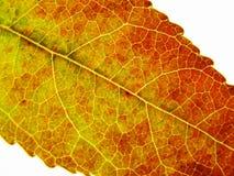 Cor do outono imagem de stock