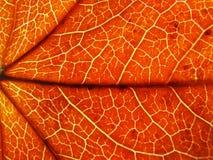 Cor do outono fotos de stock