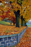 Cor do outono Foto de Stock Royalty Free