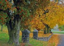 Cor do outono Fotos de Stock Royalty Free