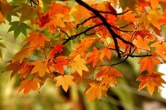 Cor do outono Fotografia de Stock
