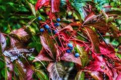 Cor do outono da natureza fotografia de stock