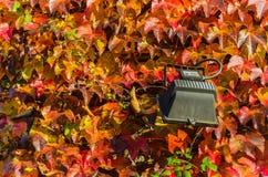 A cor do outono em uma parede ensolarada fotografia de stock royalty free