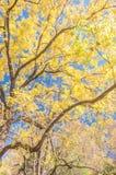 Cor do outono na angra de Cades Imagem de Stock