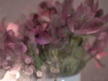 cor do rosa da flor da textura do borrão foto de stock
