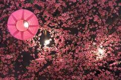 Cor do rosa da lanterna japonesa com sakura plástico imagem de stock royalty free