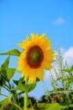 A cor do sol Imagem de Stock Royalty Free