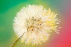 Cor do vintage e foco macio do fim acima da grama das flores para o fundo Imagem de Stock
