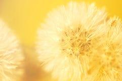 Cor do vintage e foco macio do fim acima da grama das flores para o fundo Imagens de Stock Royalty Free
