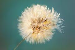 Cor do vintage e foco macio do fim acima da grama das flores para o fundo Fotos de Stock Royalty Free