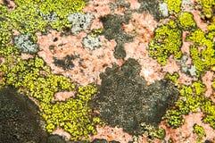 A cor dos líquenes nas pedras Fotos de Stock Royalty Free
