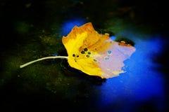 Cor dourada da folha da queda na água que reflete o outono do céu azul foto de stock