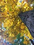 Cor em mudança da árvore Fotos de Stock Royalty Free