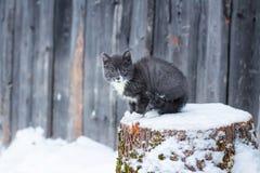 A cor fumarento do gatinho pequeno bonito senta-se em um log Imagens de Stock