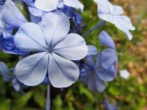 Cor Lila do En de Flores Pequeñas foto de stock royalty free