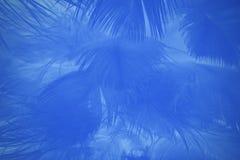 A cor macia da forma do foco tende o fundo abstrato da textura das penas macias do verão da mola Imagens de Stock