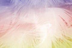 A cor macia da forma do foco tende o fundo abstrato da textura das penas macias do verão da mola Imagem de Stock