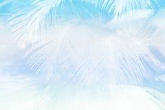 A cor macia da forma do foco tende o fundo abstrato da textura das penas macias do verão da mola Fotos de Stock Royalty Free