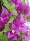 Cor marrom das flores de papel Fotos de Stock