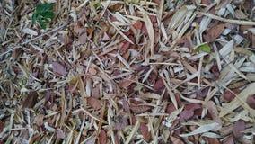Cor marrom das folhas secas Fotografia de Stock Royalty Free