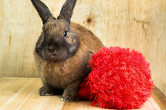 Cor marrom vermelha do coelho Fotos de Stock Royalty Free