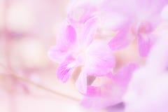 cor pastel da orquídea imagens de stock