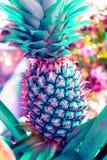 Cor pastel do abacaxi do vintage ao teste padrão e à textura criativos imagem de stock