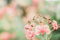 Cor pastel doce borrada das flores no borrão macio da textura do bokeh para o fundo fotos de stock