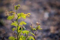 Cor verde da planta pequena fotografia de stock royalty free