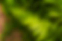 Cor verde do fundo do borrão Imagens de Stock Royalty Free