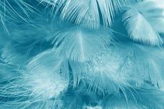 A cor verde do vintage de turquesa tende o fundo da textura da pena da galinha Fotos de Stock