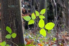 Cor verde em dezembro fotos de stock