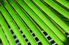 Cor verde natural sob a luz solar fotografia de stock