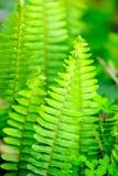 Cor verdejante Fotografia de Stock