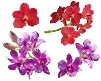 Cor vermelha do rosa do beautifil da natureza do fundo da flor imagem de stock